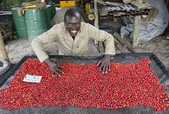 """Trapos embebidos em óleo e pimenta moída criam as """"cercas de pimenta""""  (Foto: © Haroldo Castro/ÉPOCA)"""
