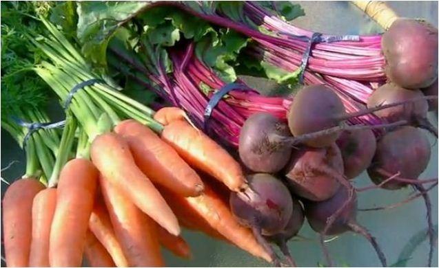 Veja dicas sobre como escolher alimentos orgânicos  (Foto: Reprodução EPTV)