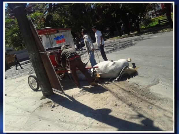 Imagem mostra cavalo preso a charrete caído e amarrado em poste em Poços de Caldas (Foto: Delma Maiochi / Reprodução EPTV)