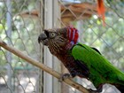 Parque Chico Mendes recebe casal de aves Anacã