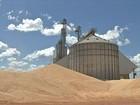 Produtores de MT seguram venda do milho à espera de preços melhores