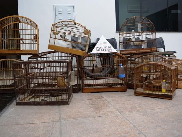 Animais foram apreendidos e 16 foram soltos, os demais passarão por readaptação ao habitat natural (Foto: Polícia Militar/Divulgação)