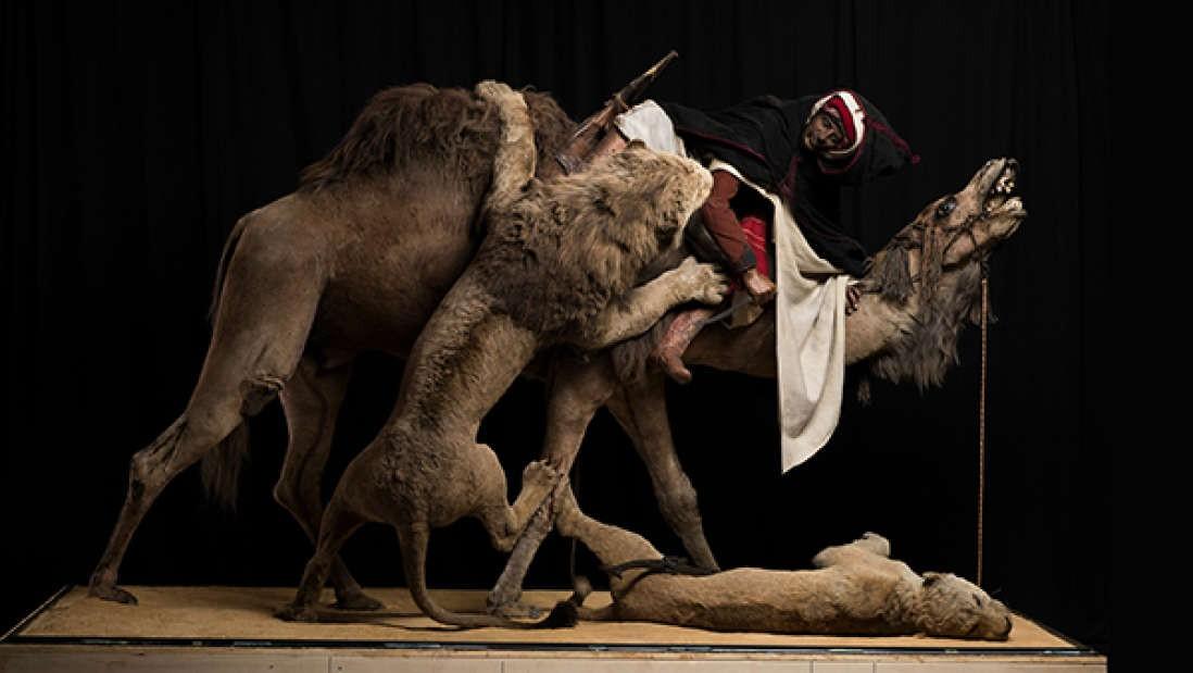 """""""Leão atacando dromedário"""", por Jules Verreaux (Foto: Divulgação/Carnegie Museum of Natural History)"""