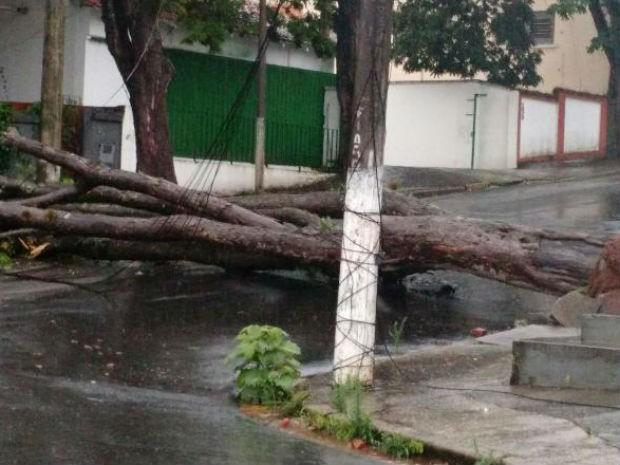 Nenhum morador foi atingido pela árvore (Foto: Karen Cristina Cipriano/Arquivo pessoal)