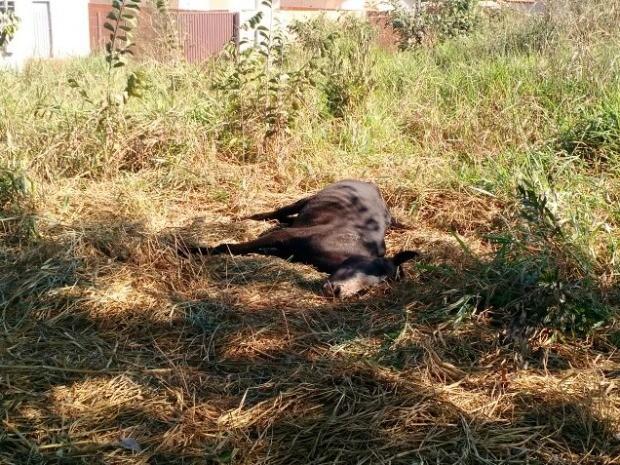 Dois cavalos foram encontrados mortos (Foto: Polícia Civil de Rondonópolis-MT)