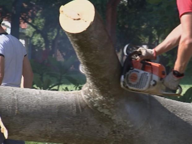 Bombeiros tiveram trabalho para retirar árvore do local (Foto: Reprodução/TV TEM)