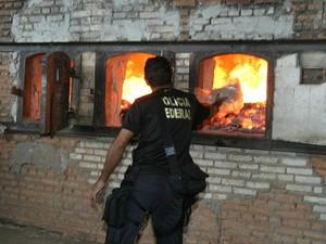 Drogas foram apreendidas em operações realizadas pela PF e PRF (Foto: Lenine Martins/Secom-MT)