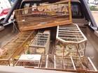 Polícia apreende 123 pássaros em gaiolas em Samambaia, no DF