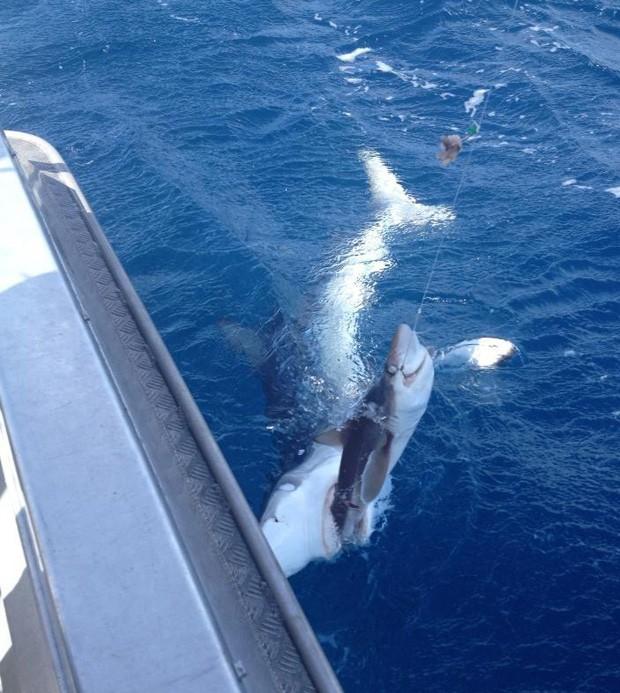 Usuário teve peixe 'roubado' por tubarão maior (Foto: Reprodução)