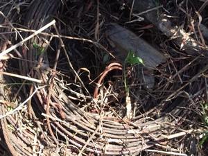 Fio de cobre foi encontrado na mata (Foto: Divulgação/Polícia Militar)