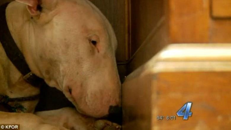 Cachorro exibe sinais de luto e não quer comer ou beber (Foto: KFOR)