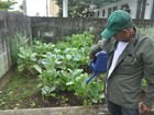 Horta orgânica ajuda no tratamento de pacientes no CAPS de Guarujá