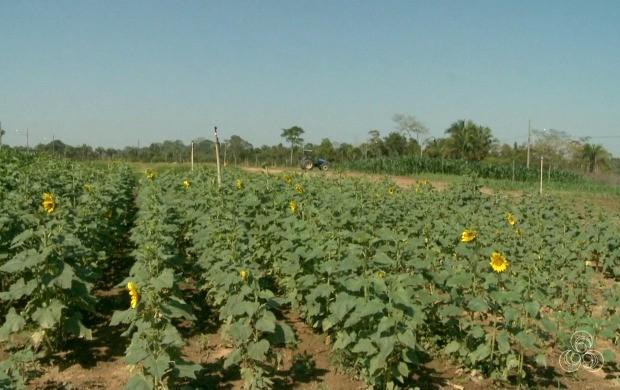 Campus do Agronegócio apresenta inovações nas técnicas de plantio, entre outras demonstrações (Foto: Bom Dia Amazônia)