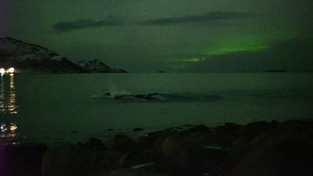 Imagens foram feitas na costa da ilha de Kvaløya  (Foto: BBC)