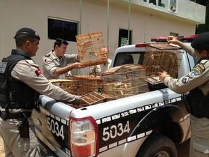 Após apreensão, aves foram levadas para o Centro de Triagem de Animais Silvestres (Cetas) (Foto: Walter Paparazzo/G1)