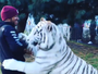 """Medo? Hamilton é """"abraçado"""" por tigre branco no México e se diverte"""