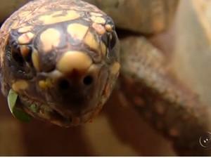 Maioria dos animais levado ao Ceretas é vítima de maus-tratos ou atropelamento  (Foto: Reprodução/TV TEM)