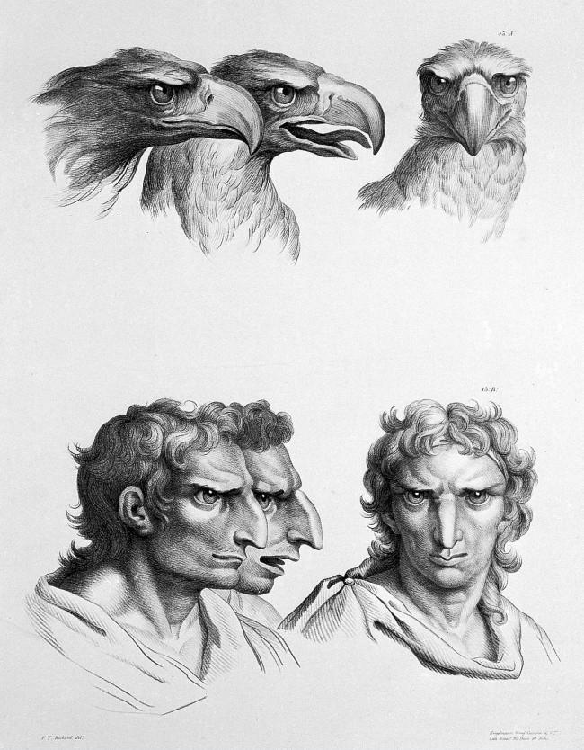 Águia (Foto: Reprodução/Charles Le Brun)