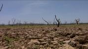Caatinga ressurge no leito seco do lago de Sobradinho (BA)