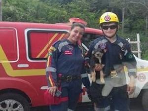 Cão foi resgatado pelo Gave de Pitangui (Foto: Marcos Sousa/Divulgação)
