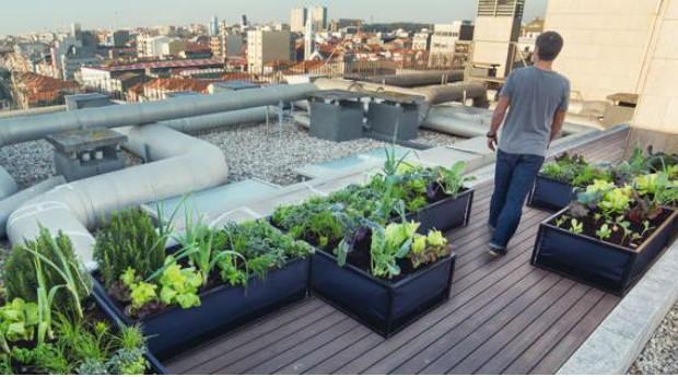 A Noocity oferece soluções para quem deseja cultivar sua própria horta, mesmo vivendo em ambientes urbanos (Foto: Reprodução/Facebook)