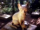 Cemitério de gatos em SC esconde história de atriz, da fama à clausura