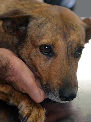 Explosivo jogado por integrante da banda de Thiaguinho feriu cadela, em Campinas (Foto: Fernando Pacífico / G1 Campinas)