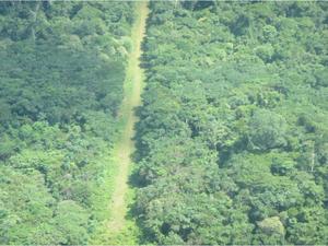 Operação Curare VI do Exército Brasileiro visa combater crimes transfronteiriços e ambientais (Foto: Divulgação/Exército Brasileiro)