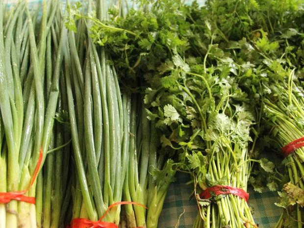 Local produz 10 tipos diferentes de hortaliças (Foto: Ive Rylo/G1 AM)