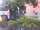 Ônibus intermunicipal bate em caminhonete e árvore em Hortolândia