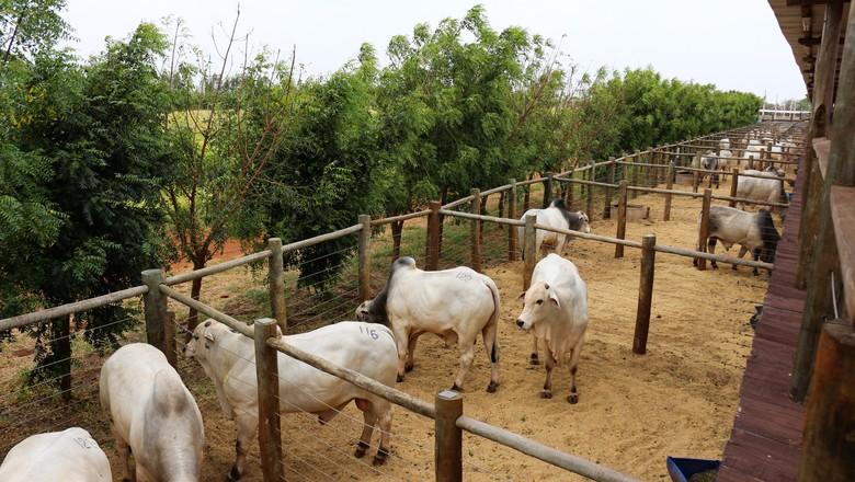 touros-gado-boi (Foto: Divulgação)