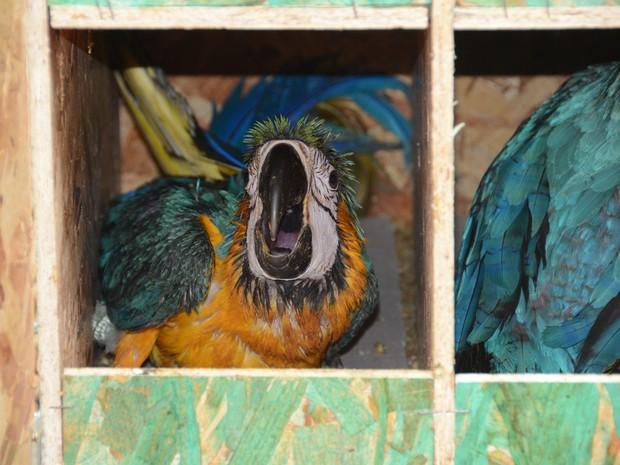 Aves foram encontradas em uma casa em Aparecida de Goiânia e seriam comercializadas em Goiás (Foto: Valério Zelaya/Prefeitura de Palmas)