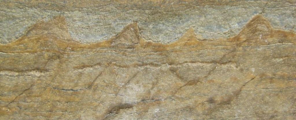 Imagem do fóssil encontrado pelos cientistas (Foto: Reprodução/Allen Nutman)