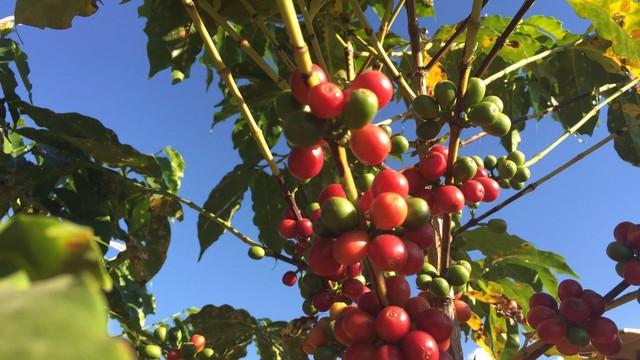 Rota do Sol - café (Foto: Arquivo Pessoal/Rosana Valle)