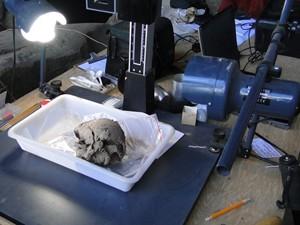 Segundo especialistas, crânio encontrado pode ter de 8,2 mil a 8,4 mil anos. (Foto: Alex Araújo/G1)