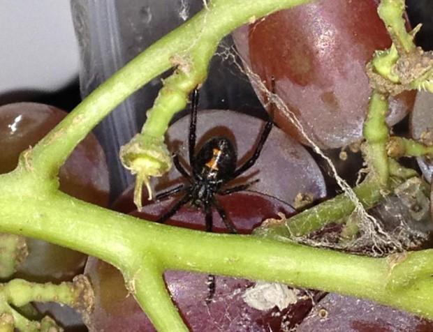 Aranha estava escondida entre as uvas e foi encontrada pela consumidora (Foto: Reprodução/Facebook)