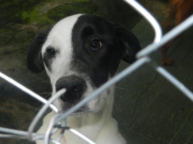 Um dos primeiros cachorros resgatados do acampamento do Pinheirinho é um dos xodós de Lilian. (Foto: Débora Carvalho/G1)