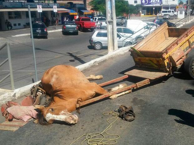 Cavalo morre com suspeita de maus-tratos e dono é detido