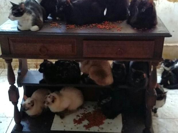 Gatos retirados de apartamento na Tijuca (Foto: Divulgação/Polícia Civil)