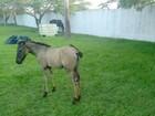 Após maus-tratos, família de cavalos é recolhida em Fórum e ganha tutor