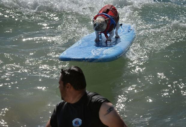 Essa é sexta edição do tradicional evento de surfe canino (Foto: Mark Ralston/AFP)