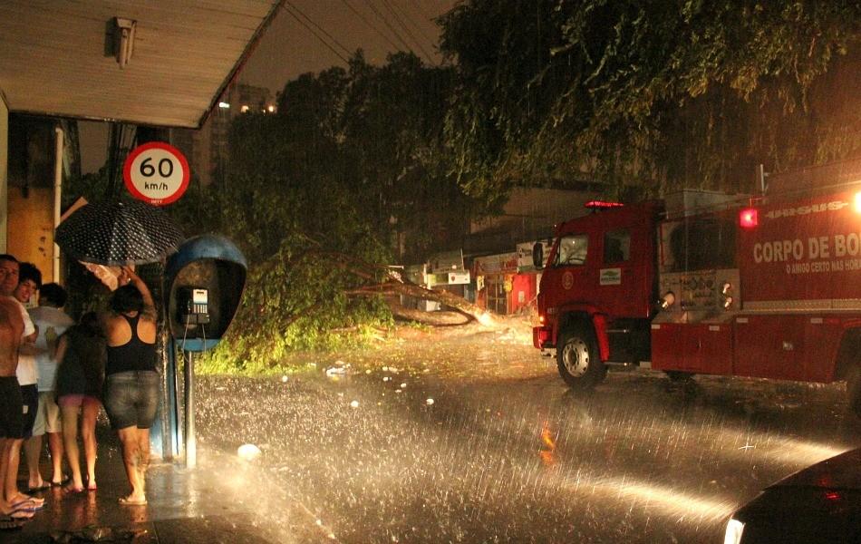 Árvore caiu na rua Joaquim Nabuco e atingiu três carros (Foto: Mônica Dias/G1 AM)
