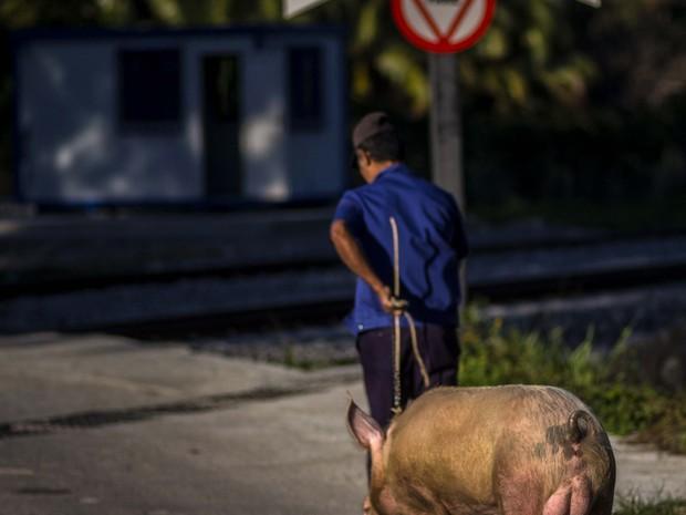 Osmar Ramirez com o porco chamado Pancho (Foto: Ramon Espinosa/AP)