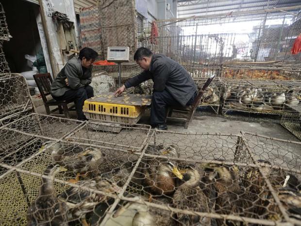 Vendedores jogam xadrez ao lado de aves em mercado de Wuhan, na província de Hubei, neste domingo (7) (Foto: Reuters)
