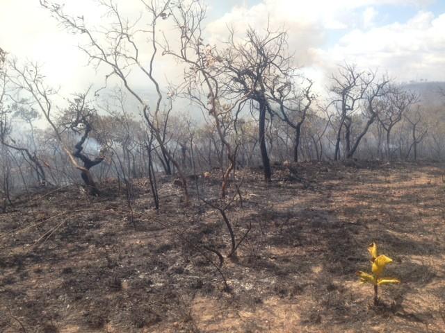 Fogo consome Serra das Areias, em Aparecida de Goiânia, Goiás (Foto: Danila Bernardes/ TV Anhanguera)