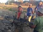 No CE, jacaré de 2 metros de espécie ameaçada de extinção é resgatado