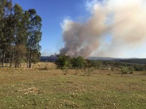 Fogo atingiu área de eucaliptos (Foto: Giuliano Tamura/TV TEM)