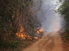Incêndio de grandes proporções atinge Floresta Nacional de Palmares