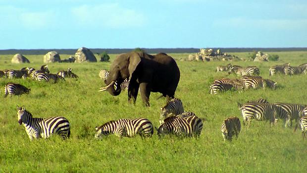 Terra da Gente se aventura pelo continente africano (Foto: Reprodução / EPTV)