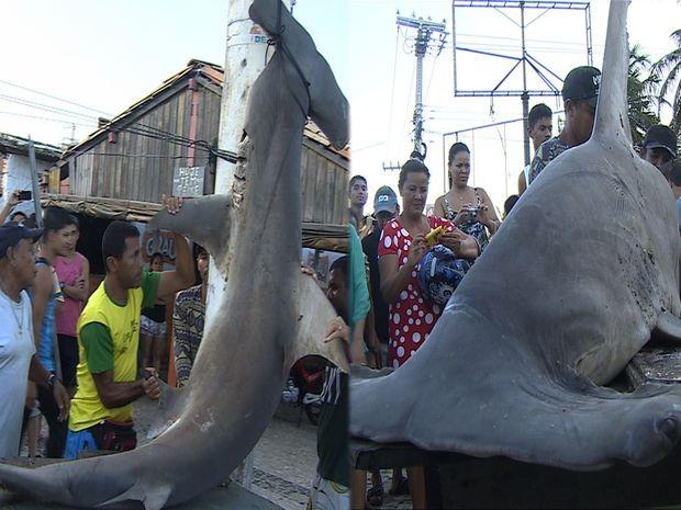 Pescadores cortaram e dividiram tubarão (Foto: Reprodução/TV Sergipe)